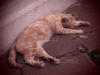 猫の写真・画像素材[52474]