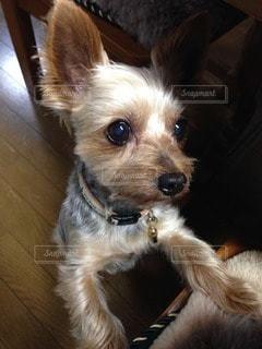 犬の写真・画像素材[45835]