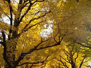近くの木のアップの写真・画像素材[1433802]