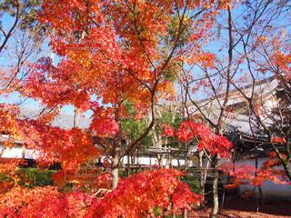 紅葉のある風景の写真・画像素材[1433807]