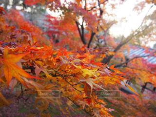 近くの木のアップの写真・画像素材[1433812]