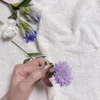紫色の花を持っている人の写真・画像素材[1560234]