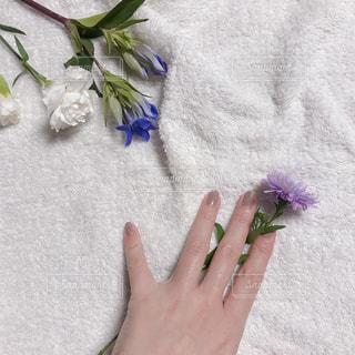 近くの花のアップの写真・画像素材[1560235]