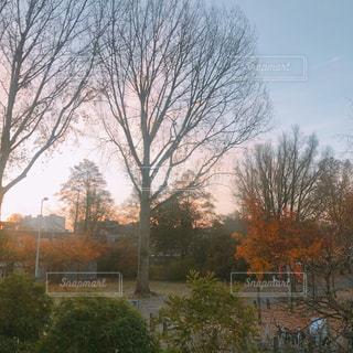 フォレスト内のツリーの写真・画像素材[1652712]