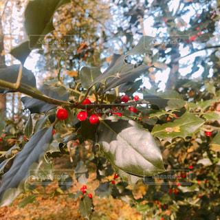 木の花の花瓶の写真・画像素材[1652732]