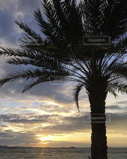 パタヤビーチのヤシの木🌴の写真・画像素材[1455522]