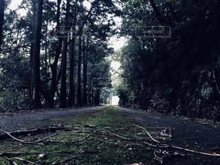 山道の写真・画像素材[2413821]