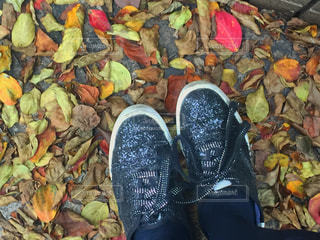 落ち葉と靴の写真・画像素材[1531433]