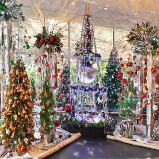 クリスマスツリーの写真・画像素材[1660700]