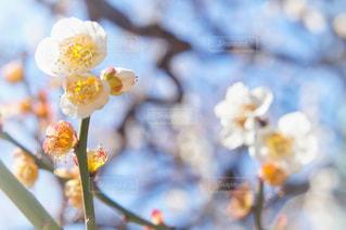 近くの花のアップの写真・画像素材[1834397]