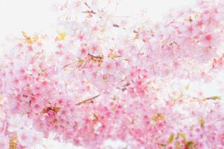 近くの花のアップの写真・画像素材[1860947]