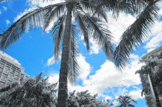 青空とパームツリーの写真・画像素材[2051324]