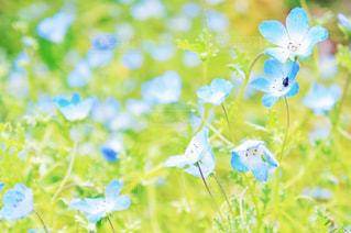 花の写真・画像素材[2051652]