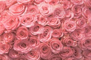 100本の薔薇の花束の写真・画像素材[2189003]