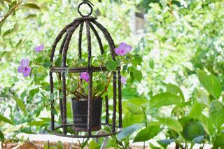 花園のクローズアップの写真・画像素材[2366702]