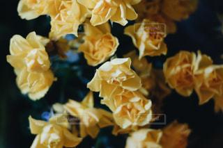 花のクローズアップの写真・画像素材[2916723]