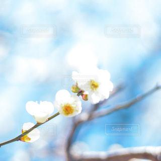 木のクローズアップの写真・画像素材[2943588]
