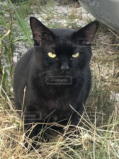 石垣島 猫の写真・画像素材[1436402]