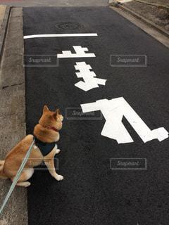 路上を歩く猫の写真・画像素材[1638399]