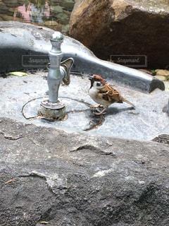 雀の水浴びの写真・画像素材[2104544]
