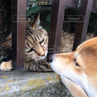 猫にこんにちはの写真・画像素材[2445639]