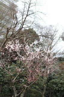 木の枝に花の写真・画像素材[1836328]