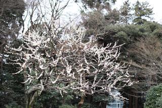 近くの木のアップの写真・画像素材[1836330]