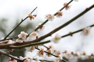 近くの花のアップの写真・画像素材[1836344]