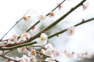 近くの花のアップの写真・画像素材[1836345]