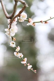 木の枝に花の写真・画像素材[1836346]