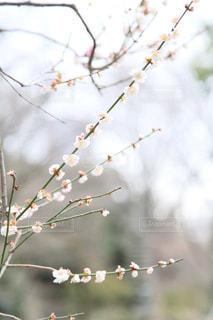 近くの木のアップの写真・画像素材[1836348]