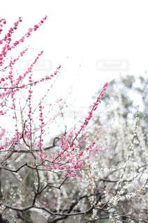 近くの花のアップの写真・画像素材[1836358]