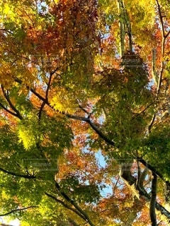 森の中の木の写真・画像素材[2735759]
