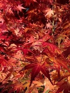 木の近くでの写真・画像素材[2735761]