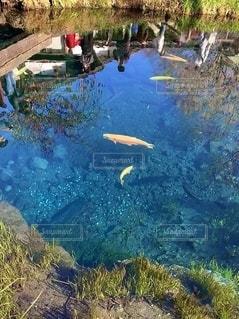 池の近くにの写真・画像素材[2735861]
