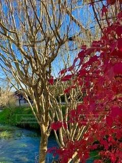 木の中の赤い花の写真・画像素材[2735867]