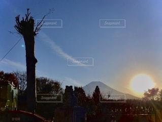 晴れた日の木の群れの写真・画像素材[2744824]