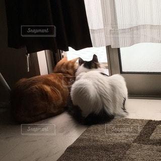 猫の写真・画像素材[52919]