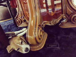 椅子に座っている犬の写真・画像素材[1437182]