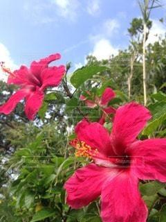 お花畑の写真・画像素材[46229]