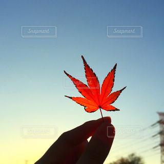 秋の公園の写真・画像素材[1437216]