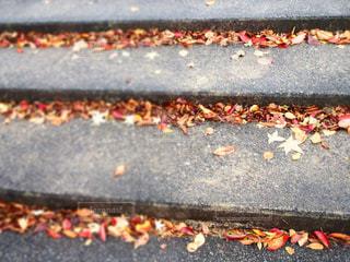 ただの階段も秋を感じる🍂の写真・画像素材[1604301]