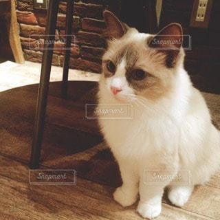 猫 - No.52523