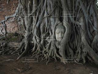 タイ旅行の写真・画像素材[1438043]