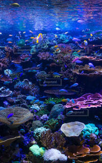 海の中の世界の写真・画像素材[1438409]
