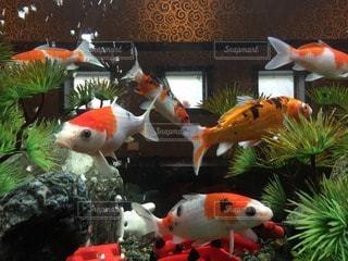 魚 - No.46184