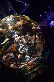 No.59614 金魚