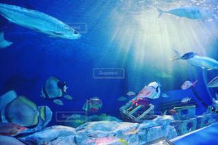 aquariumの写真・画像素材[1439114]