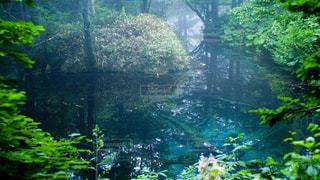 森の中の池の写真・画像素材[2370116]
