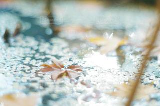 水面の紅葉の写真・画像素材[1440001]